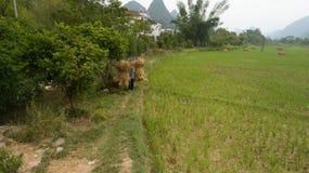 Landscape of Guilin Li River Royalty Free Stock Images