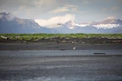 Landscape of Hallo Bay. Royalty Free Stock Image