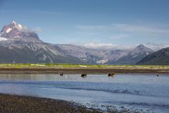 Landscape of Hallo Bay. A view of Hallo Bay's surrounding mountains and fishing grizzly bears. Photo taken on August, 2016, Hallo Bay, Katmai National park Royalty Free Stock Photo