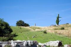 Landscape at the Hammerhus castle ruin on Bornholm, Denmark stock photo