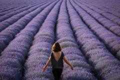 Landscape with happy and joyful woman in a lavander field.  Stock Photos