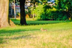Landscape with hare in the grass in the forest. Landscape with brown hare in the grass in the forest, bunny, rabbit, red, eyes, fur, hide, lay, green, plants stock image