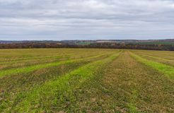 Landscape with harvested cereals field in Sumskaya oblast, Ukraine Royalty Free Stock Images