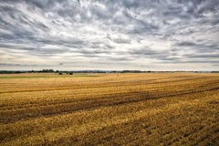 Landscape with harvested fields in summer Stock Photography
