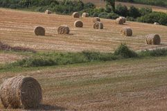 Landscape hay balls 1 Stock Photography