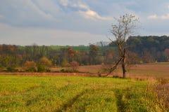 Landscape 15 Royalty Free Stock Photography