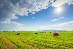 Landscape with hay roll on sunny day. Royalty Free Stock Photo