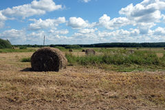 Landscape with hay rolls on cultivate field Stock Image
