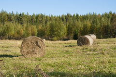 Landscape with hay stacks Royalty Free Stock Image