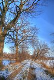 Landscape HDR photo in woods Royalty Free Stock Photos