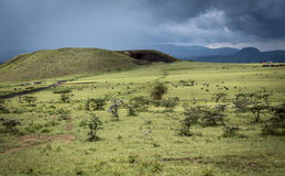 Landscape with a herd of cows, acacia and a hill under a thunderstorm in Africa Stock Images