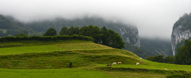 Landscape-Herd of cows in the Pyrenees-France Stock Photos