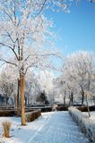 The landscape hibernal dreamlike 2. Landscape stories in the winter season in the city park Stock Photography