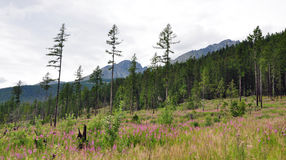 Landscape High Tatras, Slovakia, Europe Stock Photos