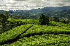 Landscape of the Hill Country, Sri Lanka Stock Image