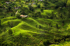 Landscape of the Hill Country, Sri Lanka Royalty Free Stock Image