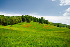 Landscape with hill and forest Stock Photos