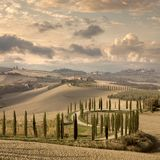 Landscape of hills, country road, cypresses - vintage royalty free stock image