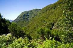 Landscape with hills and forest, Madeira, Portugal Stock Photography