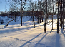 Landscape of the holiday home is surrounded by trees in winter s Royalty Free Stock Photography