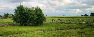 Landscape in Holland Royalty Free Stock Photos