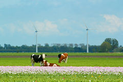 Landscape in Holland Stock Photography
