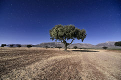 Landscape with Holm oaks in the night Stock Photography