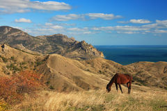 Landscape with horse Stock Photos