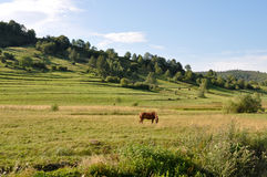 Landscape with a horse. Beautiful landscape with a horse Royalty Free Stock Photo