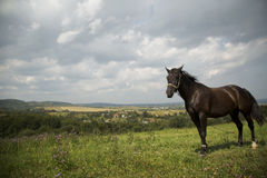 Landscape and horse royalty free stock image