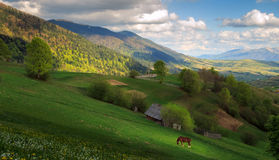 Landscape with a horse in the Carpathian mountains. Spring cloudy evening rural landscape with a red horse in the Mizhhiria, Carpathian mountains Royalty Free Stock Image