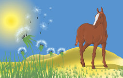 Landscape with a horse and dandelions Royalty Free Stock Image
