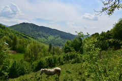 Landscape with horse, mountains, forest and meadow. Royalty Free Stock Photo
