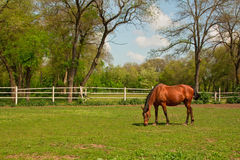 Landscape with the horse Royalty Free Stock Photos