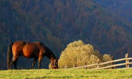 Landscape with horse / Romania royalty free stock photo