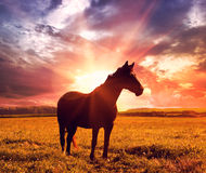 Landscape with horse Stock Photography