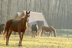 Landscape of a horse at sunset Stock Photo
