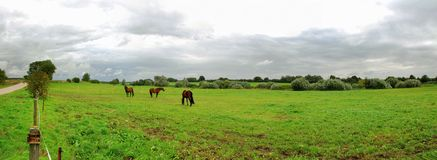 Landscape with horses. Grazing, overcast sky Royalty Free Stock Photos