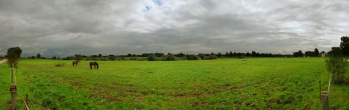 Landscape with horses. Grazing on grassland in germany, overcast sky, 180° panorama Stock Images