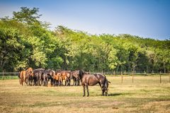 Landscape with Horses. The herd of horses is grazed on a summer green meadow Royalty Free Stock Photography