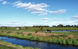 Landscape with horses stock photo