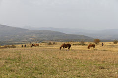 Landscape with Horses Royalty Free Stock Image