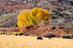 Landscape with horses in Capitol Reef National Park, Utah Royalty Free Stock Image