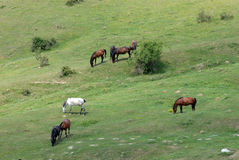Landscape with horses Stock Photos