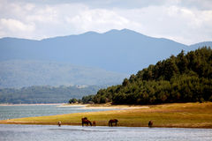 Landscape with horses Royalty Free Stock Photography