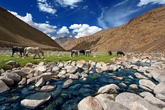 Landscape with horses near river in mountains Royalty Free Stock Images