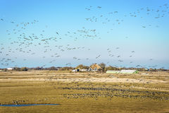 Landscape with house and birds Royalty Free Stock Image