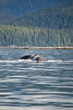 Landscape and Humpback whale tail. Whale watching adventure from Juneau Alaska / Marine life / Humpback whale tail Stock Photo