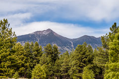 Landscape with Humphreys Peak Tallest in Arizona. Landscape with Humphreys  Peak Tallest in Arizona Stock Images