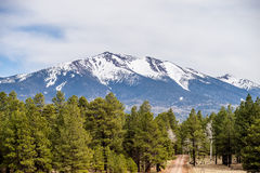 Landscape with Humphreys Peak Tallest in Arizona Royalty Free Stock Images